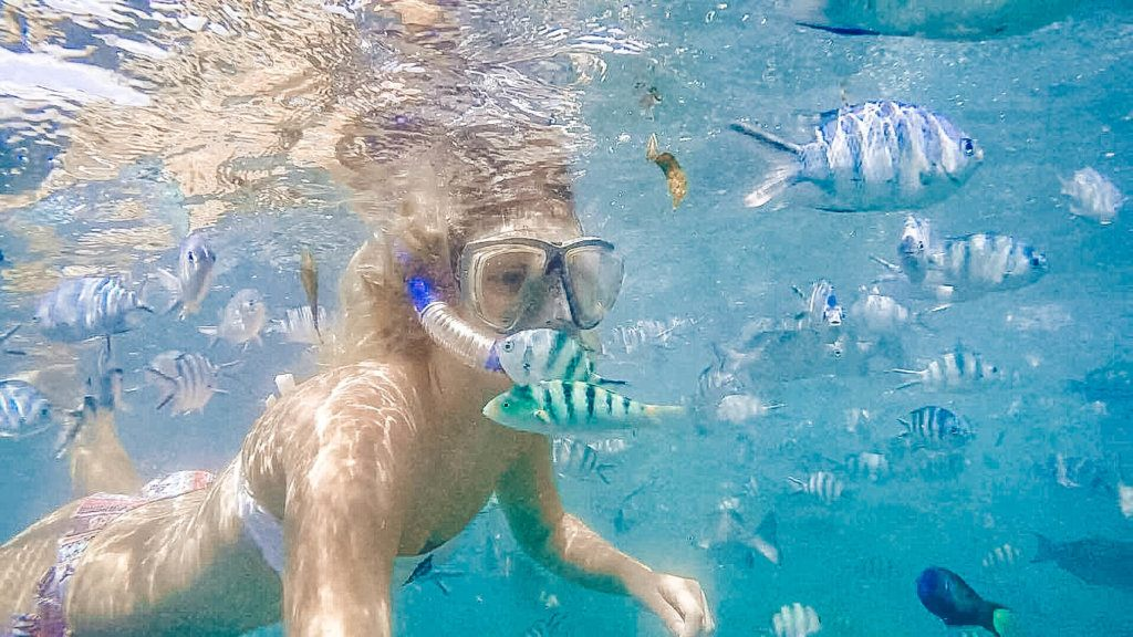 Snorkelling in the Malindi Marine National Park