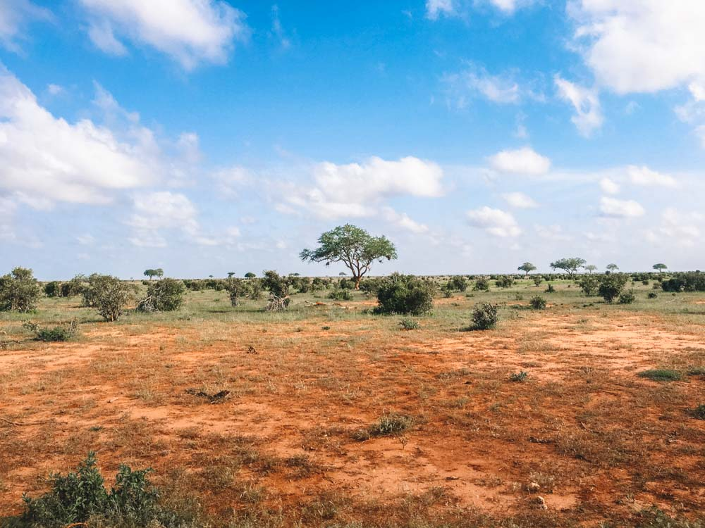 A lone tree in the beautiful savannah landscape