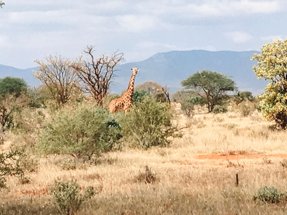 A lone giraffe that we spotted during our safari