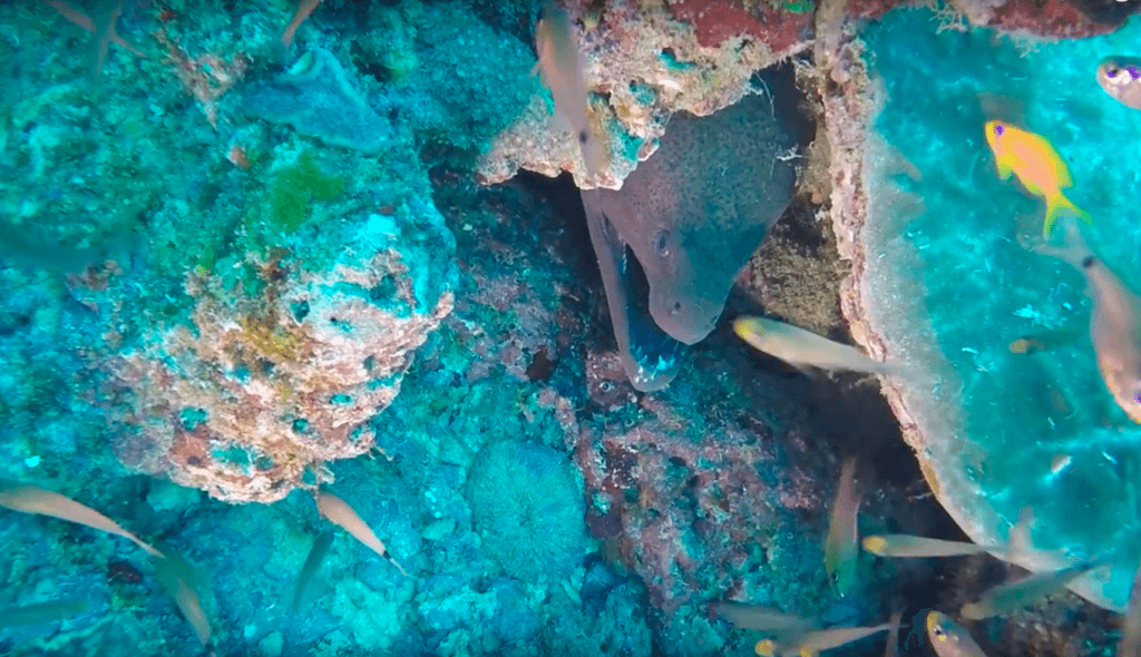 The moray we saw while scuba diving in the Watamu Marine National Park
