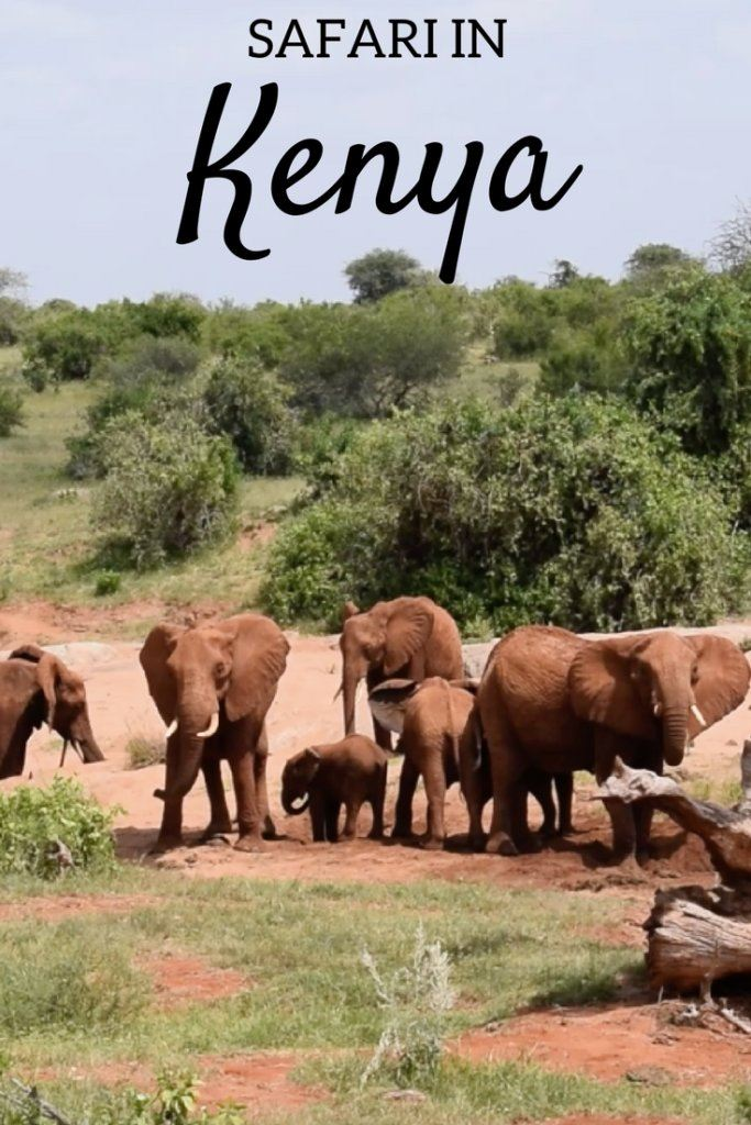 Planning a safari in Kenya? Find out everything you need to know about doing a safari in the Tsavo East National Park. #kenya #africa #tsavonationalpark #safari #africansafari #kenyasafari #traveltips #kenyatraveltips #traveladvice