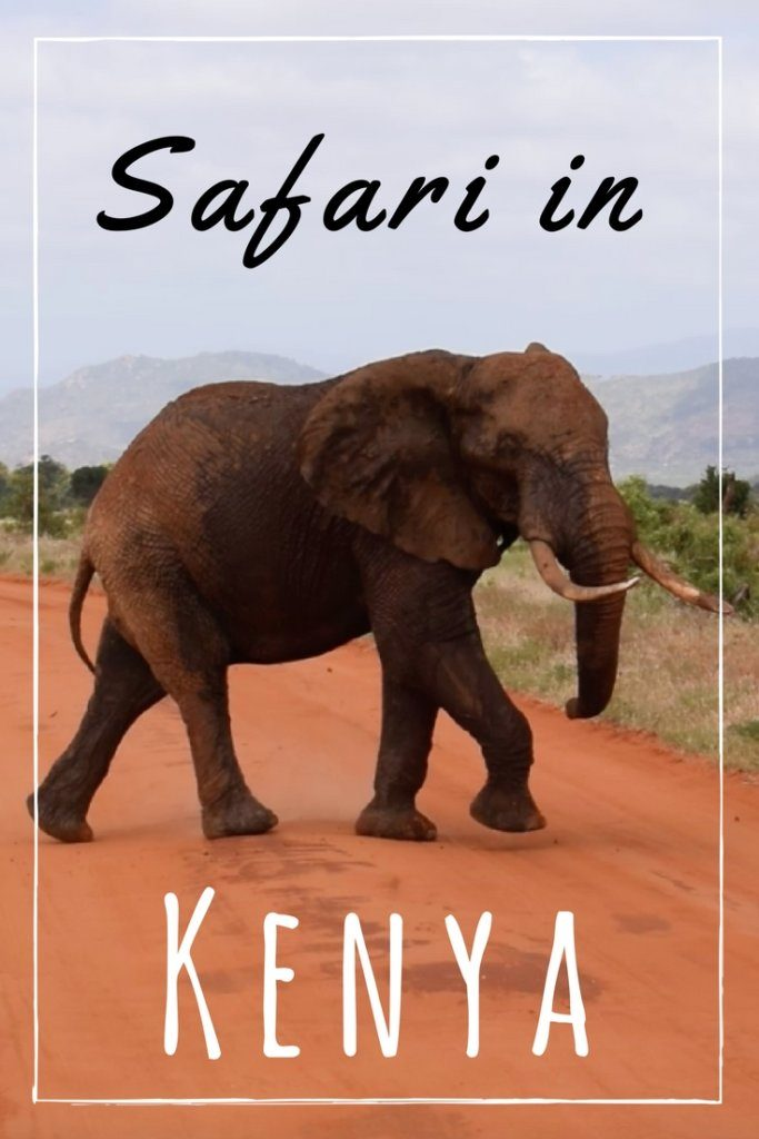 For all the animal lovers, you'll want to check this out! Going on a safari had been on my bucket list since forever (I watched too much Lion King as a child clearly) and I was really excited to finally do one in January.