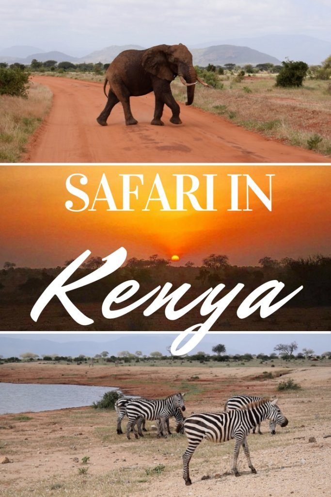Planning a safari in Kenya? Find out everything you need to know about doing a safari in the Tsavo East National Park