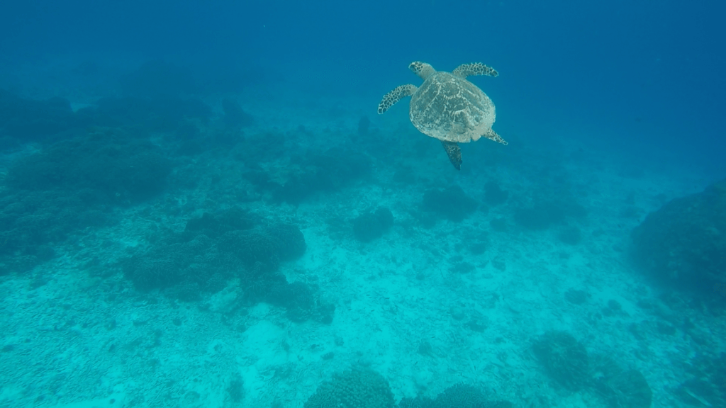 Swimming with turtles in the Similan Islands, Thailand, shot on GoPro Hero 4 Silver