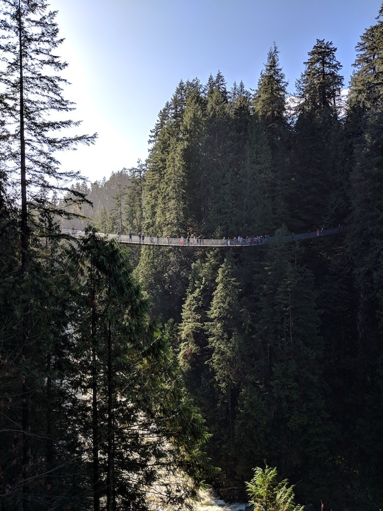 Capilano suspension bridge, photo by Renee the Wanderess