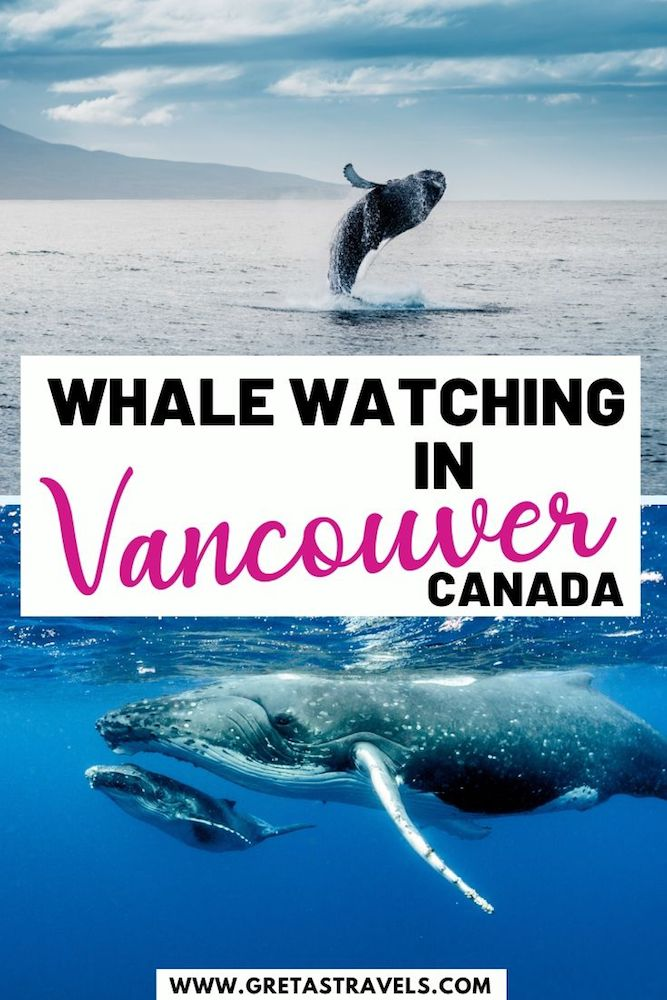"""Collage of humpback whales with text overlay saying """"whale watching in Vancouver, Canada"""""""