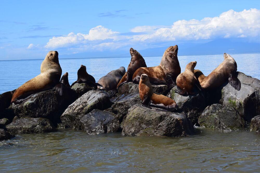 Sea lions chilling in the sun