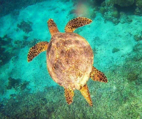 Swimming with turtles in Gili Trawangan