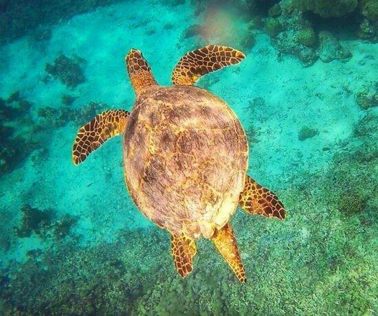 Swimming with turtles in Gili Trawangan