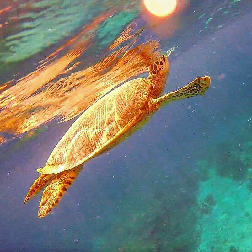 Getting close to one of the many turtles we swam with in Gili T