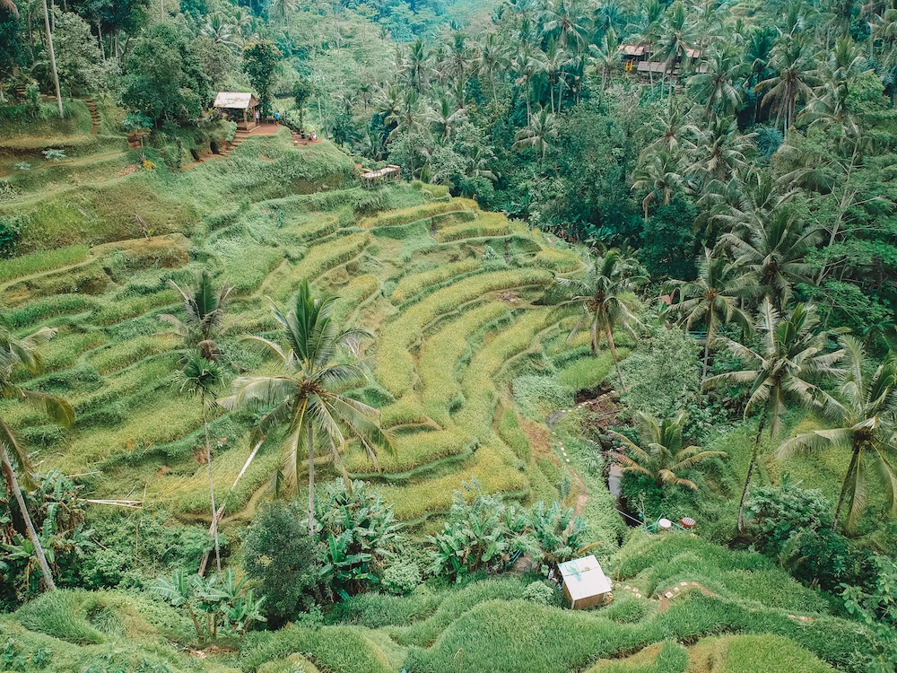 The terraced rice paddies of Tegalalang, Ubud