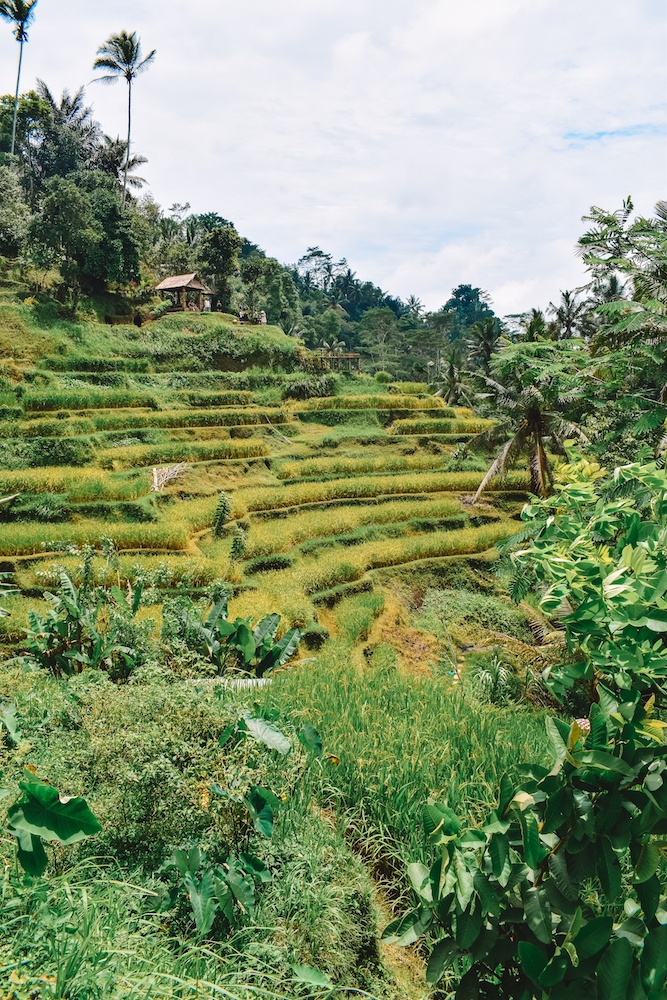 View over the Tegalalang rice terrace, Ubud