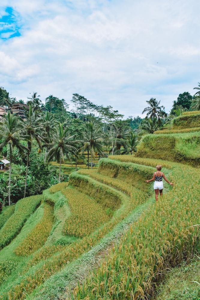 Wandering around the rice fields of Ubud, Bali