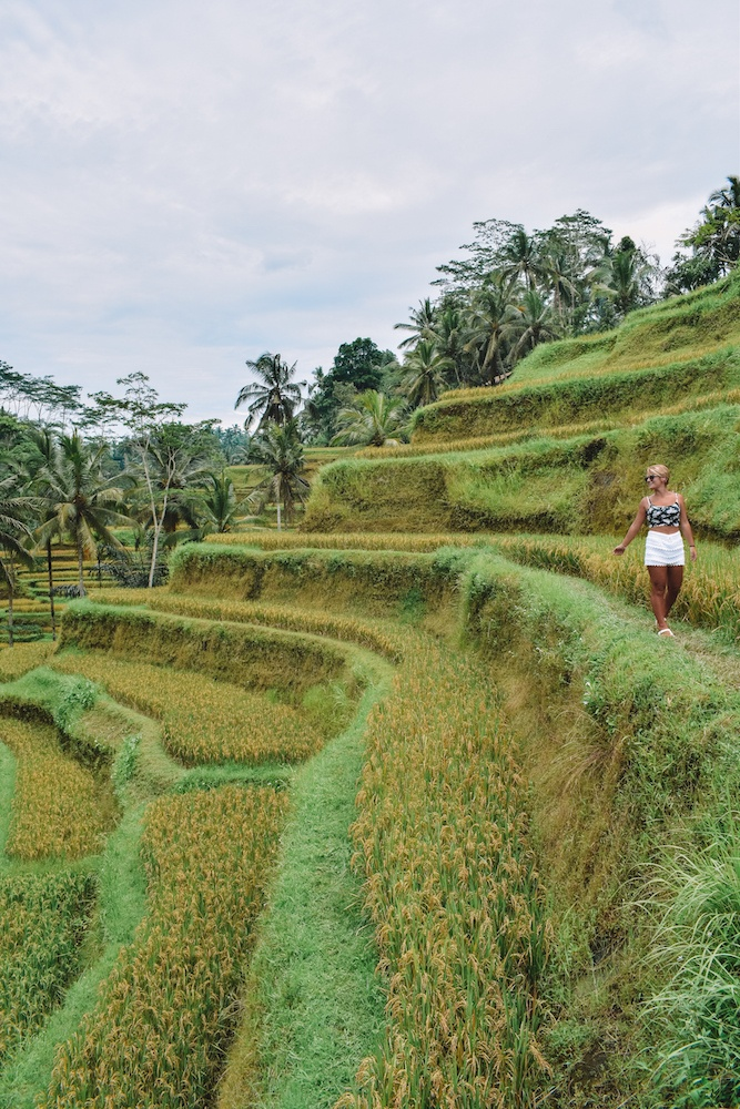Walking around the rice fields of Tegalalang in Ubud, Bali