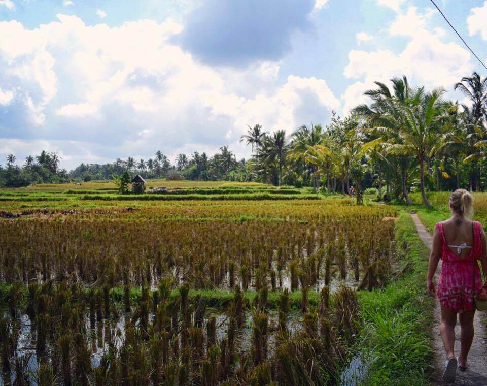 Exploring the rice fields in Ubud