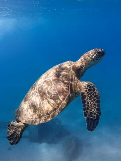 Snorkelling with turtles in Gili Trawangan- Photo by Christopher Erazo on Scopio