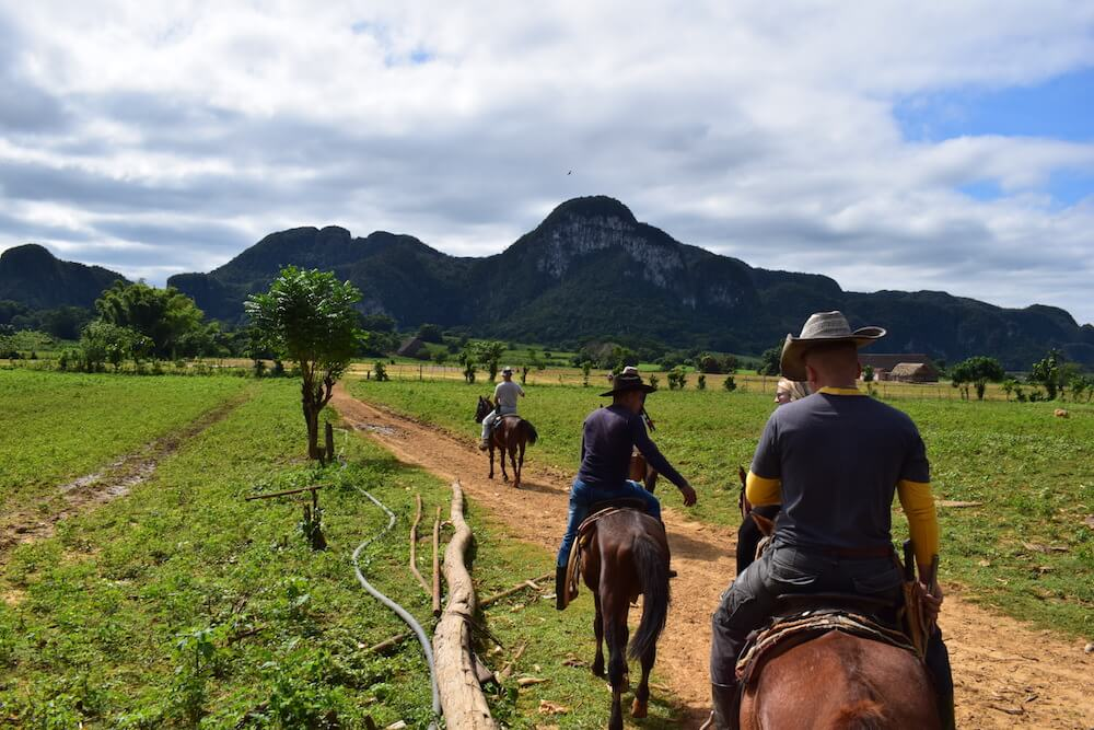 Horses in the valley of Viñales