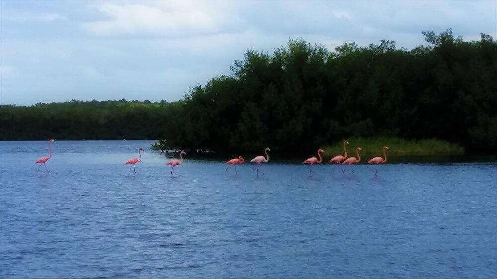Flamingos in Laguna Guanaroca, photo by Tales of a Backpacker