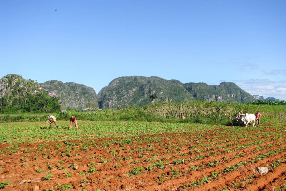 Tobacco Farm in Vinales, photo by Teresa of Brogan Abroad