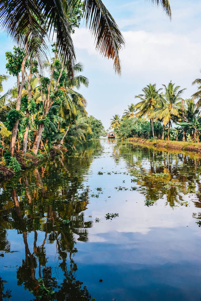 Palm tree reflections in the backwaters of Kerala, India