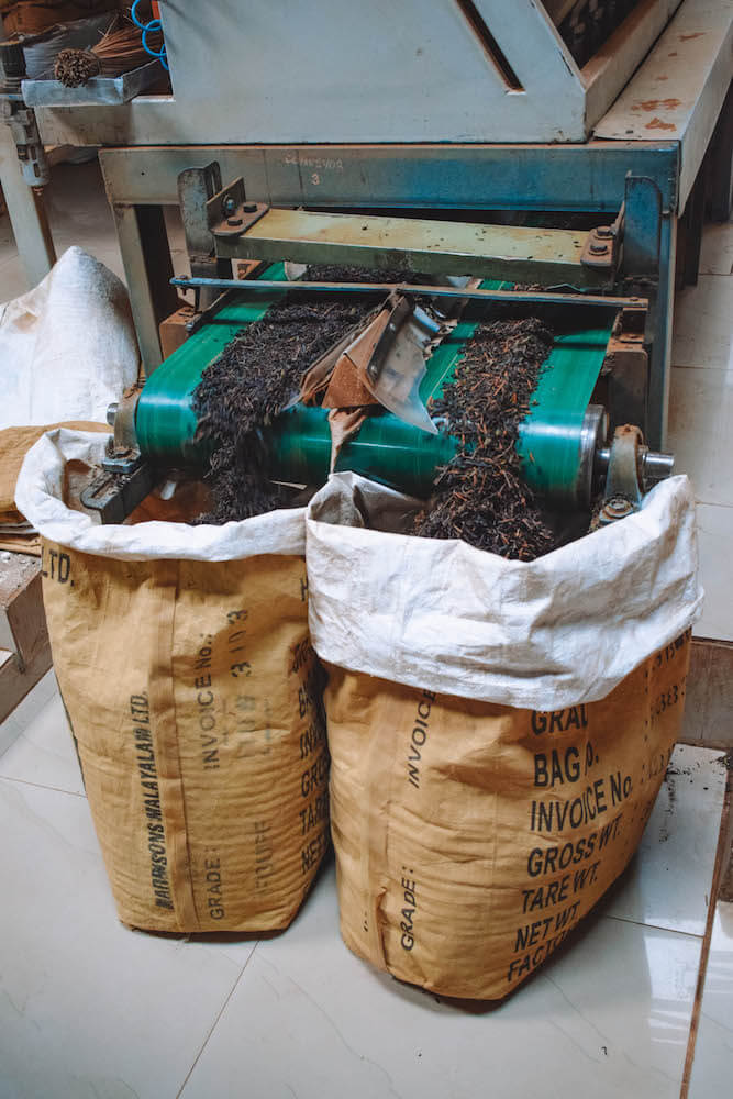 The tea leaves being sorted in sacks