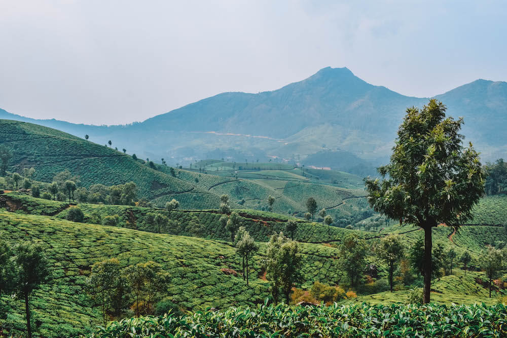 View over the tea plantations of Munnar, India