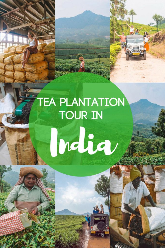 If you want to visit a tea plantation, Munnar in India is one of the best places to do so! Located in the hills of Kerala Munnar is a beautiful region with rolling tea fields that you can visit. Find out everything you need to know about doing a tea plantation tour in Munnar, India. #india #kerala #munnar #teaplantations #teaplantationtour #4WD #tea #keralablogexpress