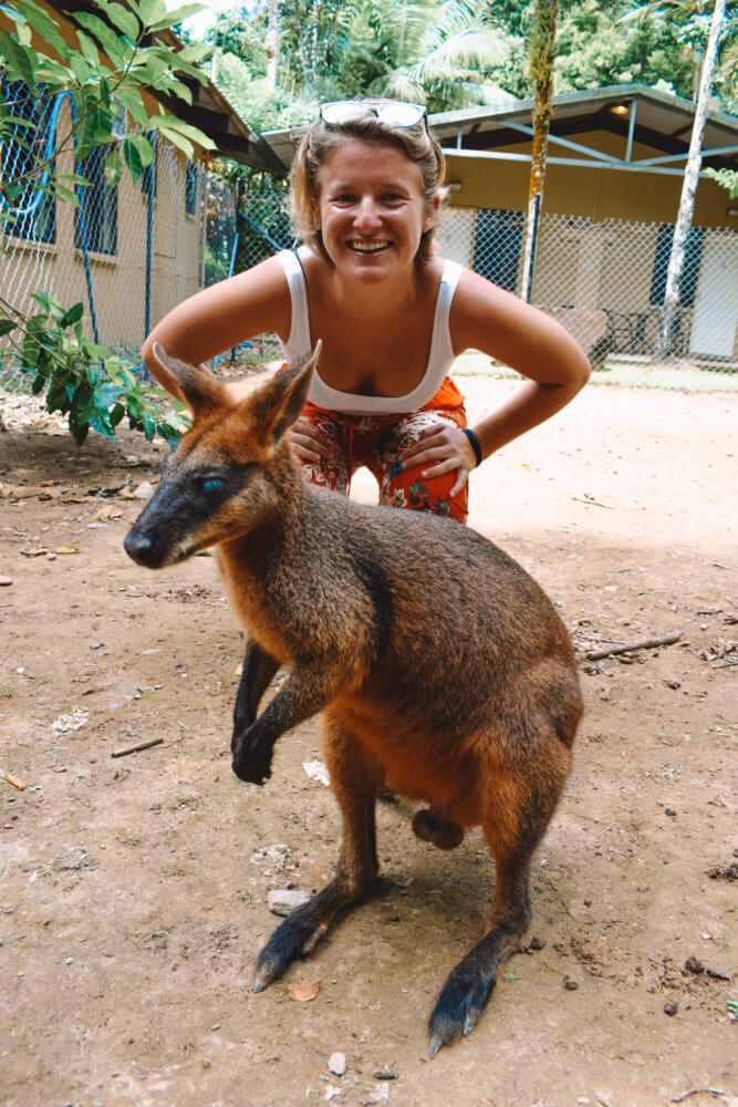 Hanging out with wallabies at our barbecue lunch stop during our Daintree Rainforest tour