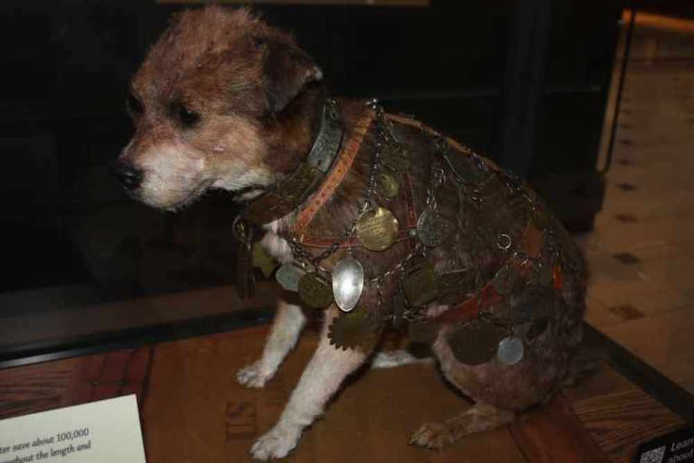 Owney the Postal Mascot at the National Postal Museum, photo by Travel As Much