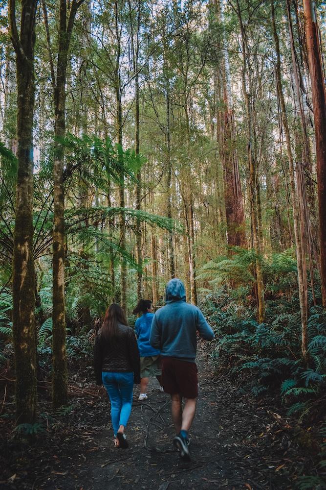 Exploring the Great Otway National Park, Australia