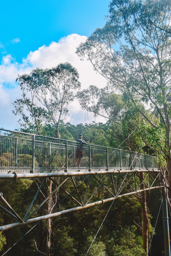 The treetop walk at Otway Fly Treetop Adventures, Great Otway National Park, Australia