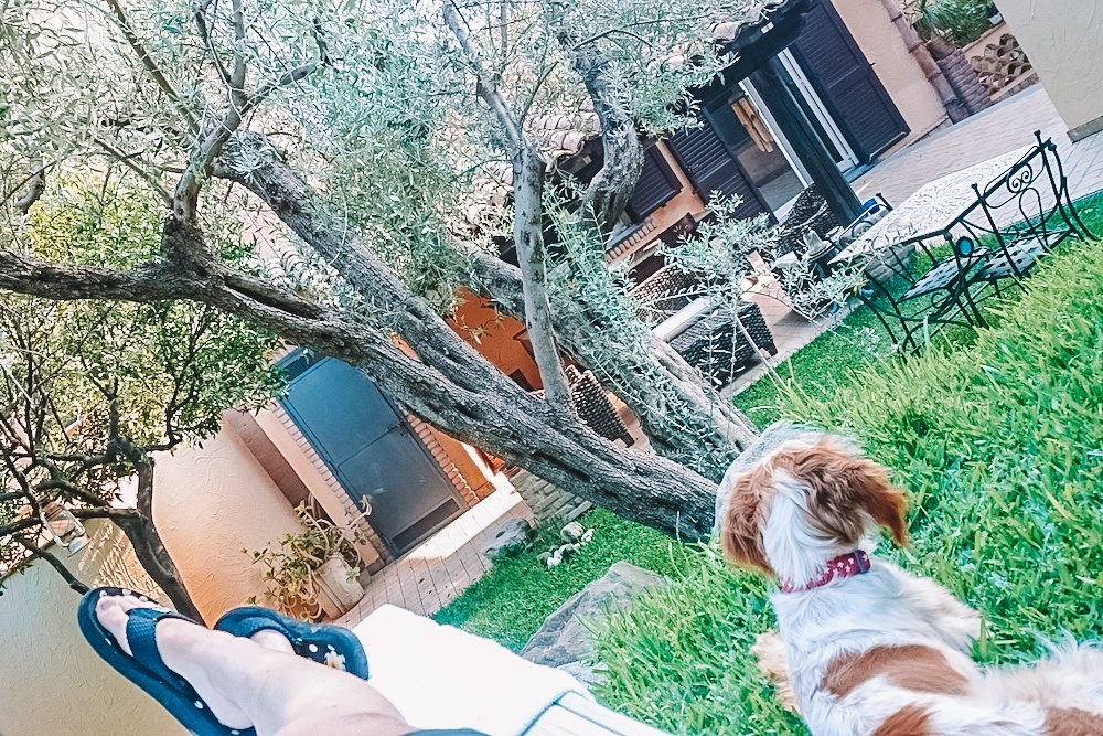 Enjoying the tranquility of the garden in accommodation in Gaggi, photo by A girl and her dog on the road