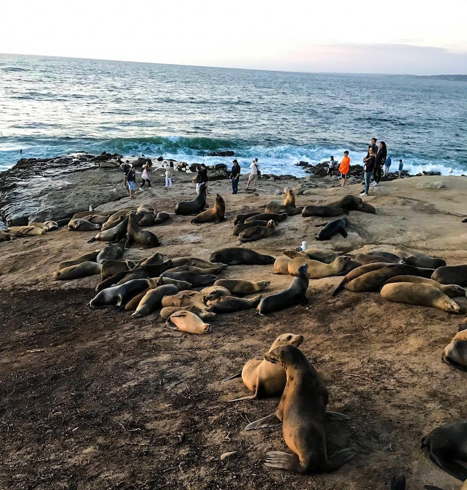 Seals in San Diego