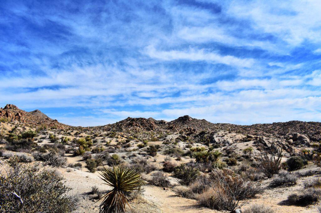 Desert views in Joshua Tree National Park - Photo by Sarah Czajkowski on Scopio