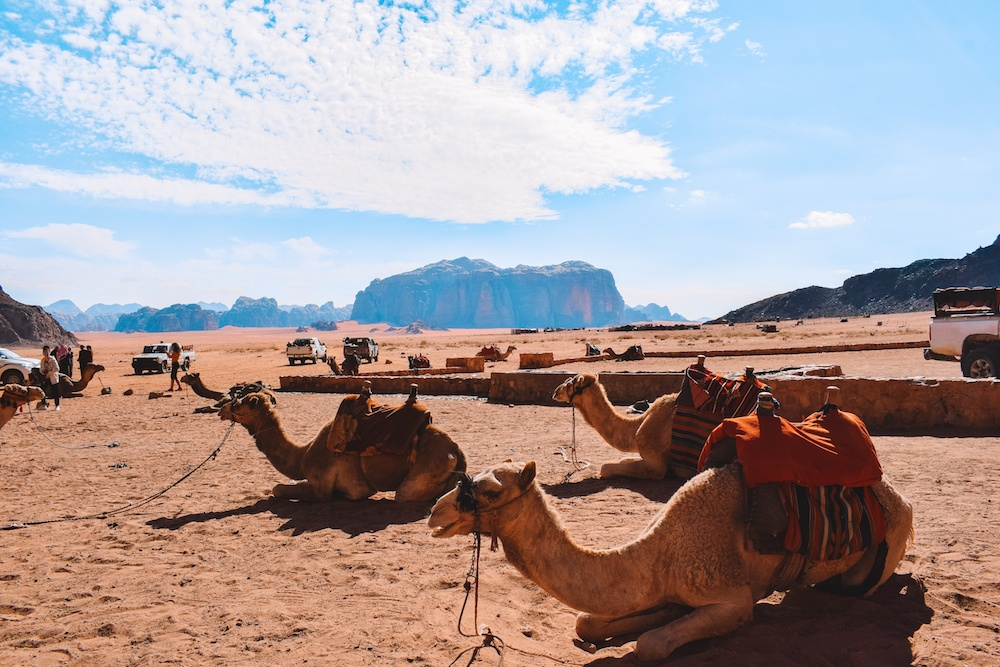 Camels in the Wadi Rum desert, Jordan