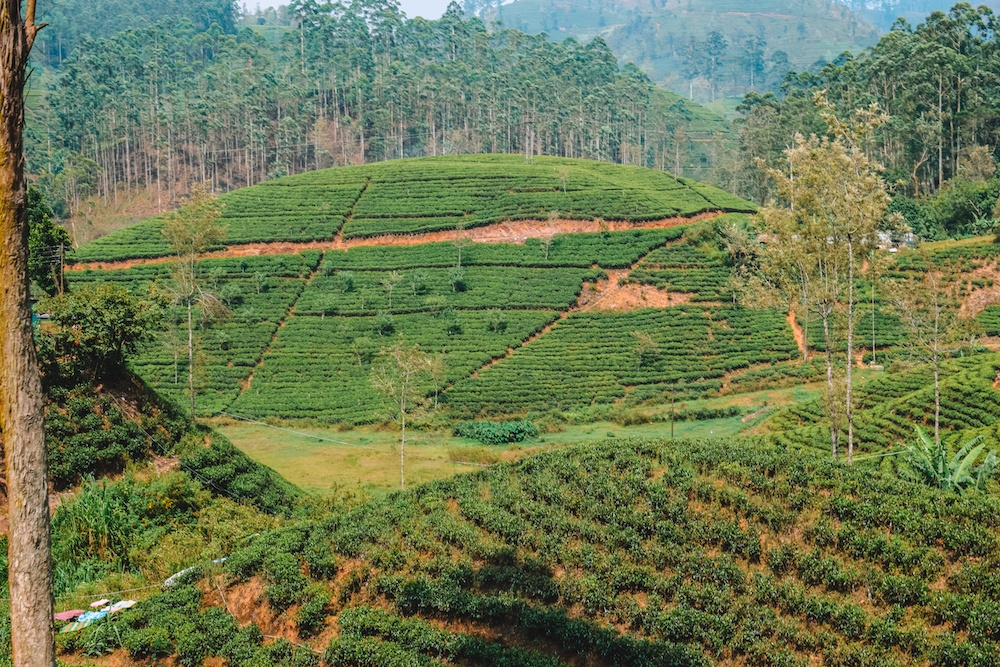 View over the tea plantations in Sri Lanka during the Kandy to Ella train journey