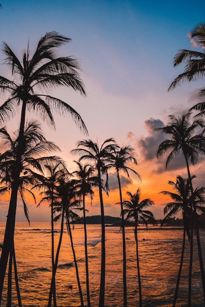 Sunset at the famous coconut hill in Mirissa, Sri Lanka