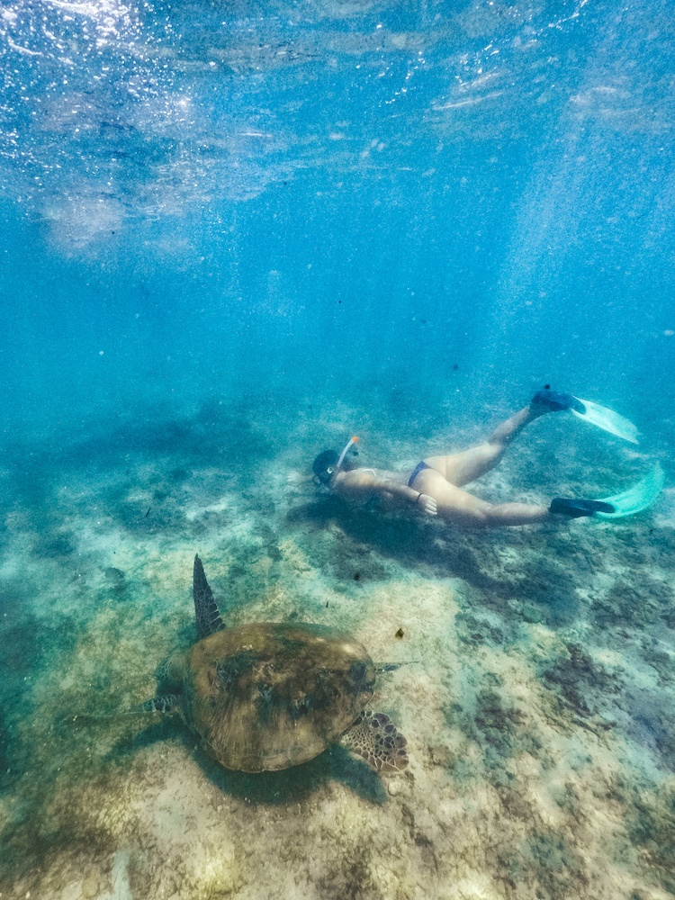 Snorkelling with turtles in Mirissa is a must-do activity when you spend 2 weeks in Sri Lanka
