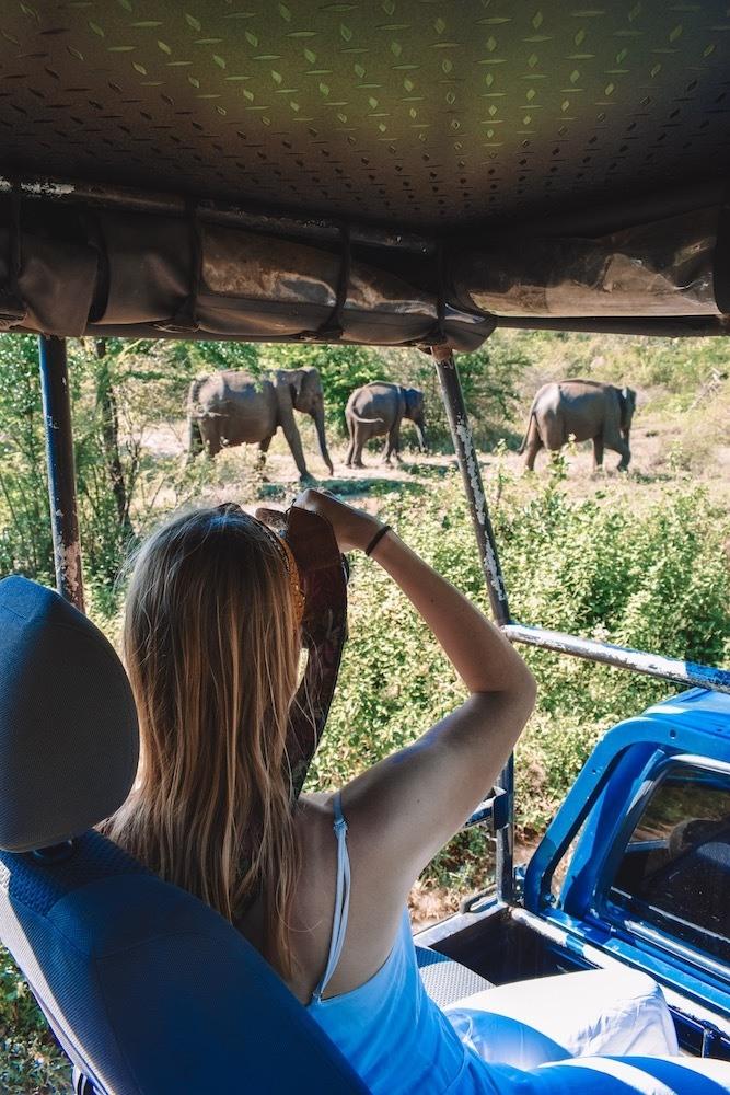 Elephant safari in Udawalawe National Park, a must visit in any Sri Lanka 2 week itinerary