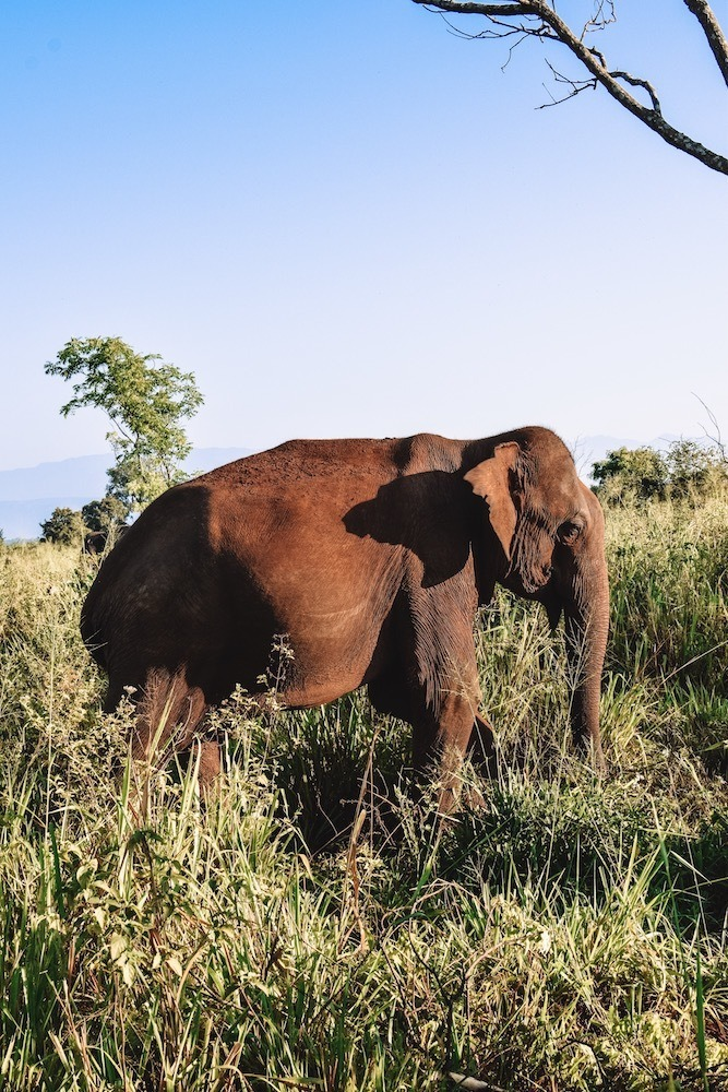 The first elephant we saw during our safari in Udawalawe National Park, Sri Lanka