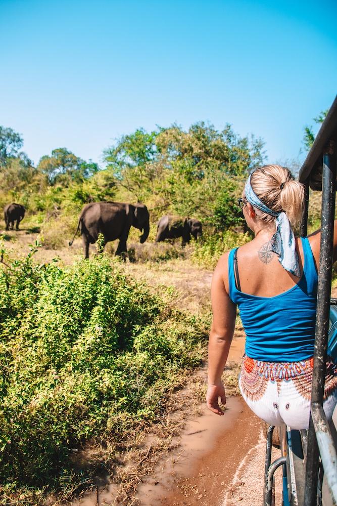 Elephant safari in Udawalawe National Park, a must see in any Sri Lanka 2 week itinerary