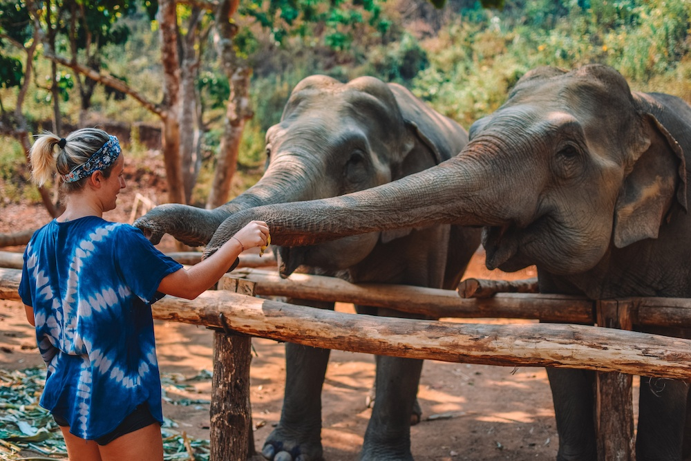 """Feeding the elephants at Elephant Green Hill, part of the Elephant Nature Park """"saddle-off"""" project"""