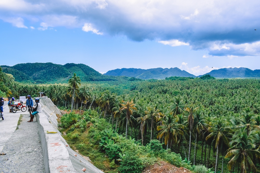 The coconut tree viewpoint in Siargao
