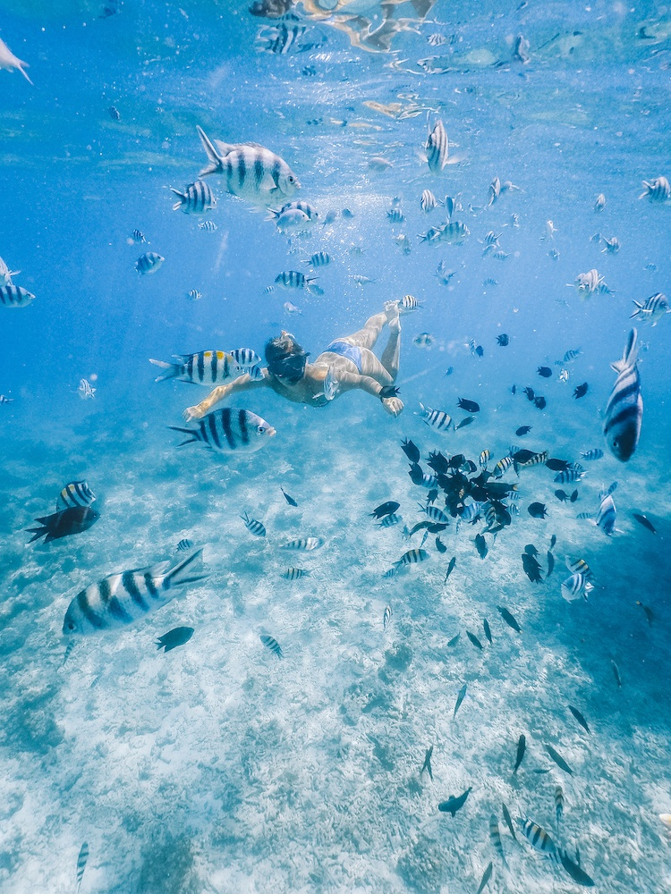 Snorkelling with millions of fish during our boat trip in El Nido, Philippines
