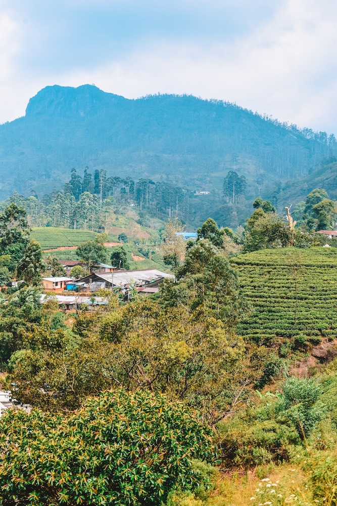 Views over the tea plantations during our Kandy to Ella train journey