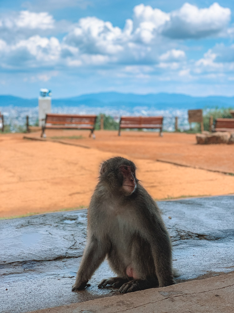 A monkey in the Arashiyama Monkey Park in Kyoto