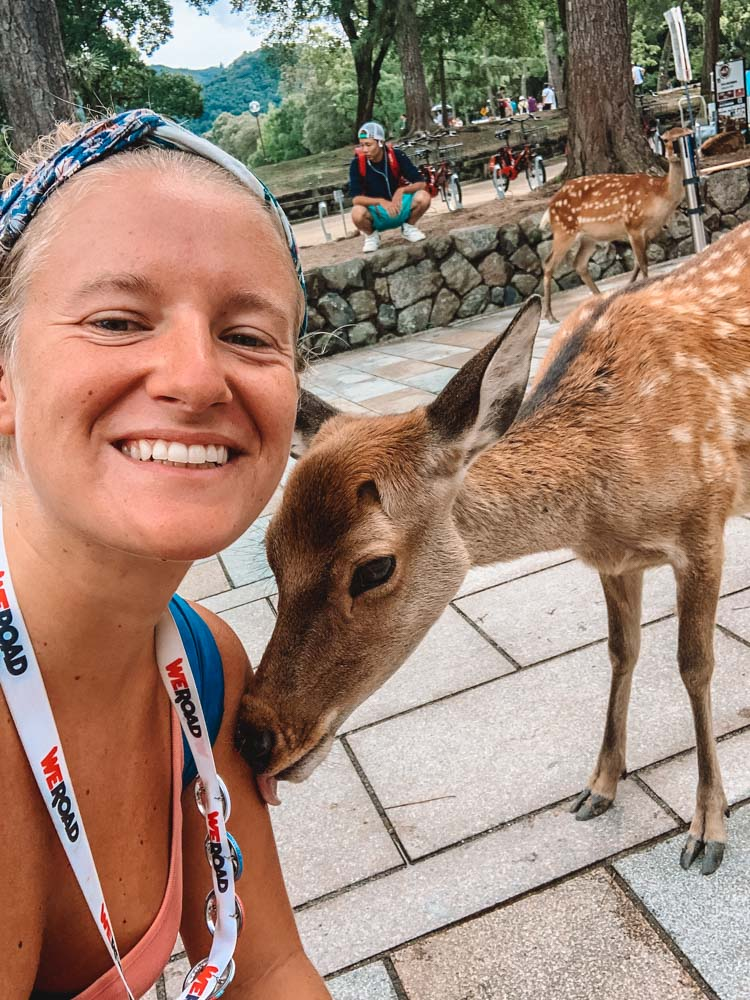Trying to befriend one of the deer in Nara, Japan