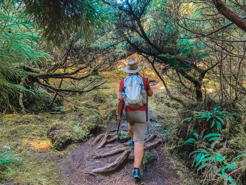 Hiking in the Misterios Negros Reserve in Serreta, on Terceira Island