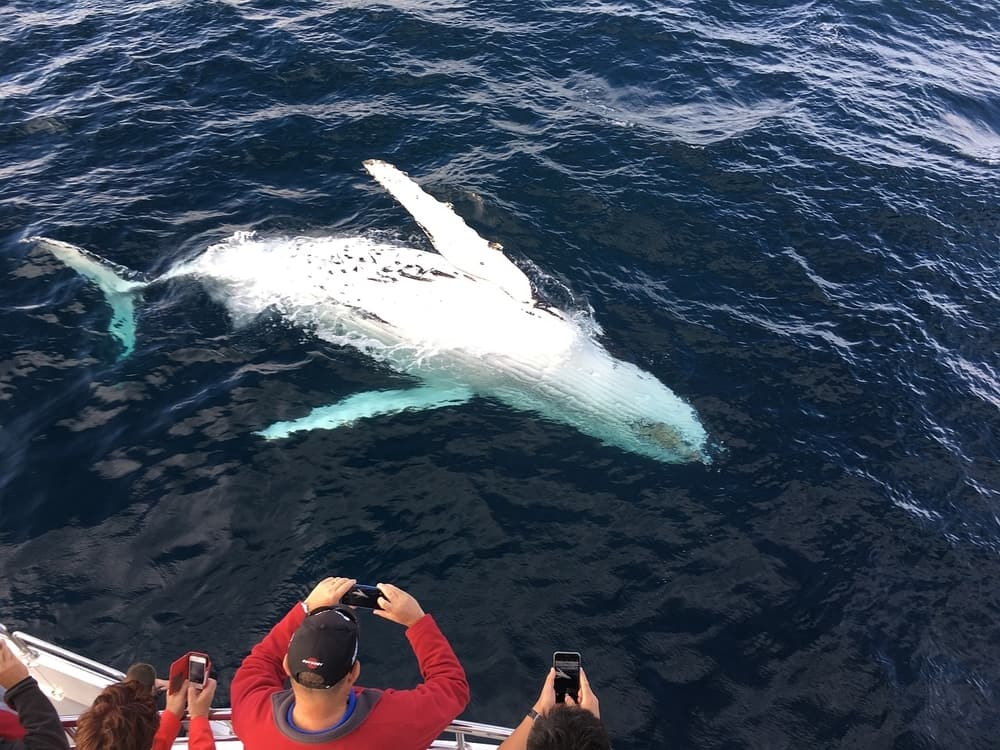 Whale watching tour in Terceira Island
