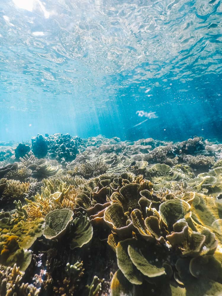 Some of the beautiful corals you will see when snorkelling on your El Nido island hopping tours